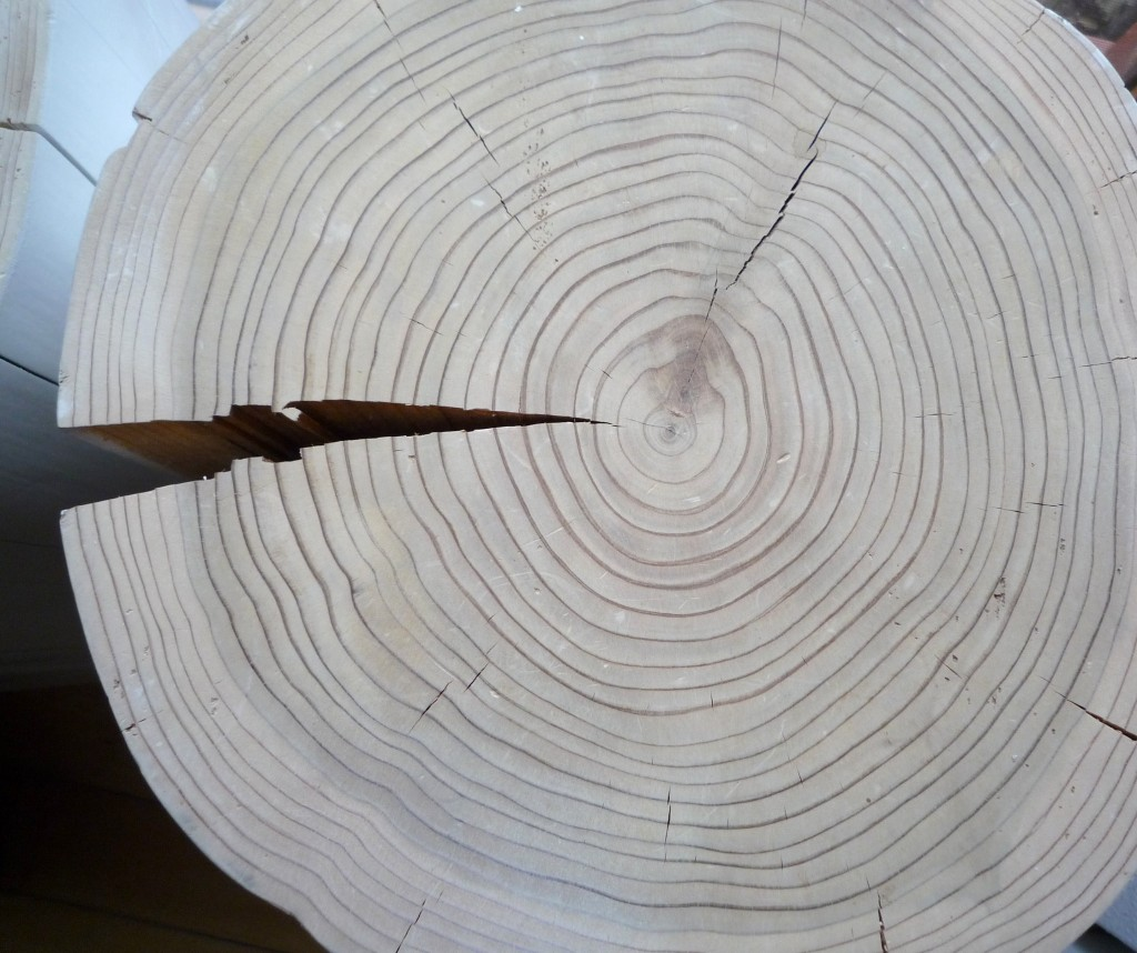 "Hirnholz ""Tuja"" Lebensbaum"